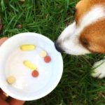 Pain Medications for Dogs